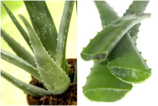 calm the eyes with cooling aloe vera
